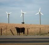 Cowsandwindmills